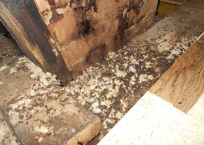 Bat Waste in attic